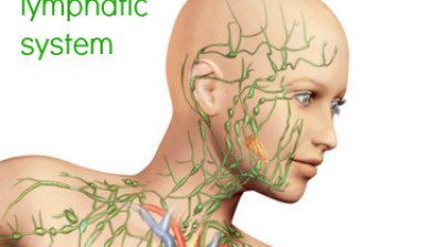 lymph nodes face